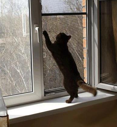 Москитная «антикошка» из фибергласса для защиты животных